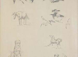 Magpies, Herons, Horse
