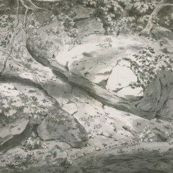 Study of Rocks and Trees