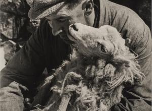 Trust, Sheep Shearing, Wales, 2017.9.14