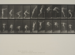 Jumping, Standing High Jump, plate 161 from Animal Locomotion